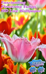 Fascinating Blossoms Tulips - screenshot