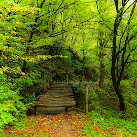 Trail by Costin Mugurel - Nature Up Close Trees & Bushes ( nature, autumn, green, trail, forest, road, bridge, landscape, path )