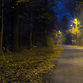 Road in the forest by Jean Bogdan Dumitru - Novices Only Street & Candid