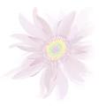 Download Full Provesta for Women 0.1 APK