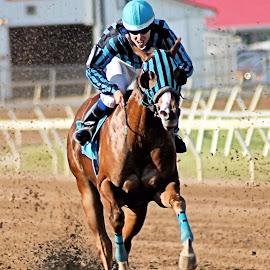 Tasha by David Blose-Photography - Sports & Fitness Other Sports ( indiana downs, jockey, horse racing, quarter horse, quarter horse racing )