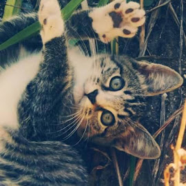 by Courtney Marie - Animals - Cats Kittens