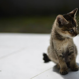 a way to wait by Cecep Lutvi - Animals - Cats Kittens
