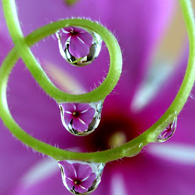 by Wahyudi Barasila - Nature Up Close Natural Waterdrops