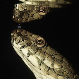 by Jovan Petrovski - Animals Reptiles