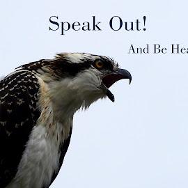 Words of the Osprey by Val Brackenridge - Typography Captioned Photos ( screeching osprey, wild bird, bird of prey, fish eagle, nature, fish hawks, wildlife, raptor, osprey )
