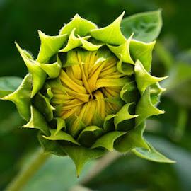 by Nevenka Zajc Medica - Nature Up Close Gardens & Produce