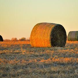 Troy Hay Rolls by Kevin Dietze - Landscapes Prairies, Meadows & Fields