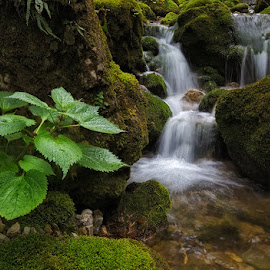 Green by Klempa None - Landscapes Waterscapes