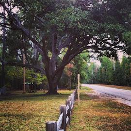 Kountze, TX by YEK 567 - City,  Street & Park  City Parks ( JJ_Forum_1012, jj_texas, snaptexas, ig_texas, igofhouston, igerstexas )