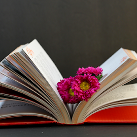 by Dipali S - Artistic Objects Other Objects ( open, nature, flora, book, read, study, holy, bellis, veda, education, flower )