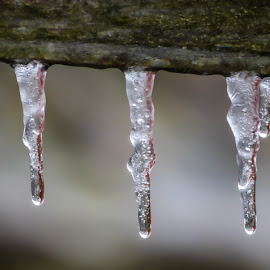 Icicles by Greg Sommer - News & Events Weather & Storms