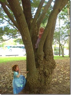 06 tree climbers