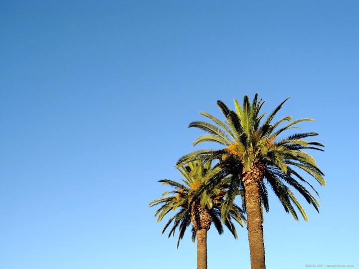 Davis palms