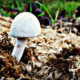 Nature's Recycling Plan by Tamsin Carlisle - Nature Up Close Mushrooms & Fungi ( heap, mushroom, recycling, dung, white, ground, pile, growing, sri lanka )