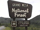 Grand Mesa National Forest Camping