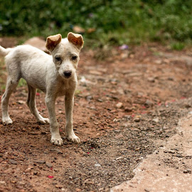 Cuteness Overloaded by Rahul Kunhiraman - Animals - Dogs Puppies ( love, simple, pet, puppy, cute )