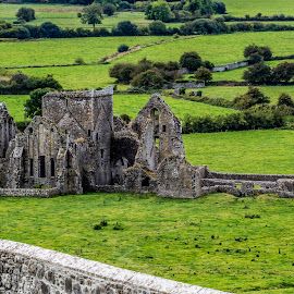 Abandoned abbey by Monika Tržić - Buildings & Architecture Decaying & Abandoned ( building, ireland, tree, grass, green, meadow, trees, stone, architecture, abbey,  )
