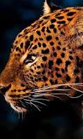 Screenshot of Leopard Jungle live wallpaper