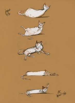 Drawing Cat S