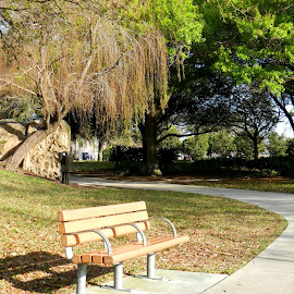 Place to Relaxand Enjoy by Kathy Rose Willis - City,  Street & Park  City Parks ( park, bench, florida, greenery, largo, path, trees )