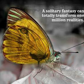 fantasy by Lina Marano - Typography Quotes & Sentences (  )