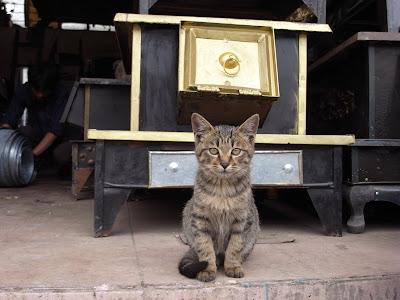 炉灶店的猫