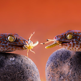 Lunch time by Kutub Macro-man - Animals Reptiles ( macro, nature, gecko, reptile, close-up, animal )