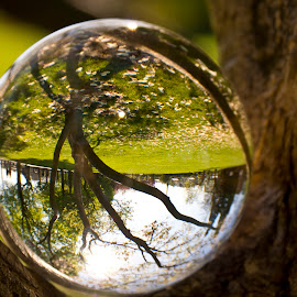 Meadow and tree in the sphere by Linda Brueckmann - Artistic Objects Glass (  )