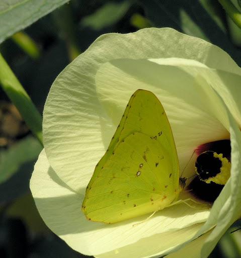 P9251427 Picasa Nature Plaiboy