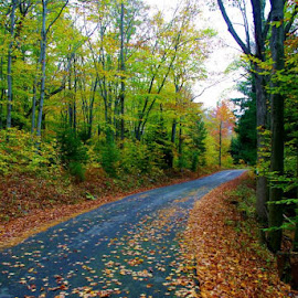 fall road by Joann Jarrett Brasington - Landscapes Forests ( autumn, trail, fall, road, leaf, leaves )