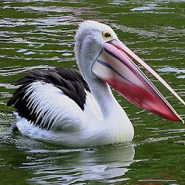 by Sirajuddin Halim - Animals Birds