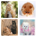 Persian Cats Live Wallpaper