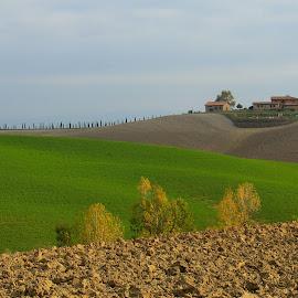 Autumn In Toscana by Miro Zalokar - Landscapes Prairies, Meadows & Fields