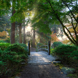 Portland Japanese Garden by Chris Bartell - Landscapes Travel ( bushes, sun shone, green, fall, trees, rock, bridge, sun,  )