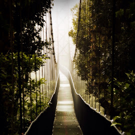 into the fog  by Uschi Rules - Buildings & Architecture Bridges & Suspended Structures ( foggy, fog, green, costa rica, trees, bridge, bridges, suspended, rainforest )