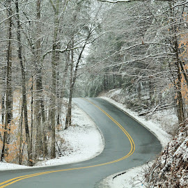 ~Serenity~ by Michelle Chamblee - Landscapes Mountains & Hills ( road to nowhere, windy road, forest, road, mountain road, light snow )