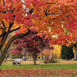 Autumn Walk In The Park by Gene Walls - City,  Street & Park  City Parks ( orange, bench, park, grass, green, pennsylvania, city park, leaves, red, nature, autumn, foliage, fall, trees, gold,  )