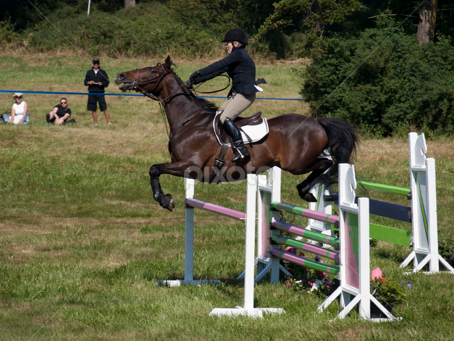 Horses jumping cross country - photo#11