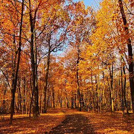 Through The Woods We Go by Phil Koch - Landscapes Forests ( vertical, fine art, yellow, travel, leaves, love, sky, nature, tree, autumn, trail, flowers, light, flower, orange, twilight, agriculture, horizon, portrait, dawn, serene, outdoors, trees, floral, natural light, wisconsin, ray, road, landscape, phil koch, sun, photography, blue sky, path, horizons, office, clouds, park, green, back light, scenic, morning, ferns, shadows, field, red, blue, color, sunset, peace, fall, meadow, landscapephotography, beam, sunrise, landscapes, hike, mist,  )