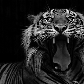 by Robert Cinega - Black & White Animals