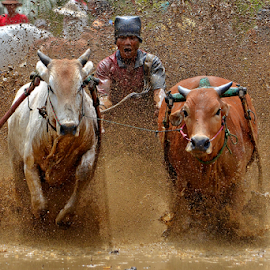 Tugudak..tugudak.. by Alhas Kasidatur Ridhwan - Sports & Fitness Rodeo/Bull Riding