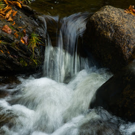 Little River, October by Peter Wilkins - Landscapes Waterscapes