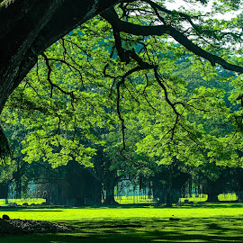 Bogor Presidential Palace, Indonesia by Fuad Arief - Nature Up Close Trees & Bushes