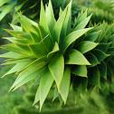 ? Plant