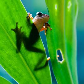 Looking Around by Andri Priyadi - Animals Amphibians ( macro, animals, frog, indonesia, nikkor, nikon, frogs, animal )