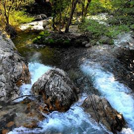 Água nascente by Ana Batista Constantino - Landscapes Forests ( floresta, natureza )