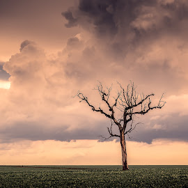 ... by Matheus Dalmazzo - Landscapes Prairies, Meadows & Fields ( field, clouds, tree )