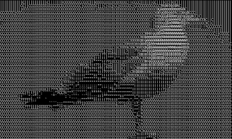 Screenshot of ASCII cam (free version)