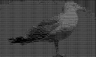Screenshot of ASCII cam (free version)